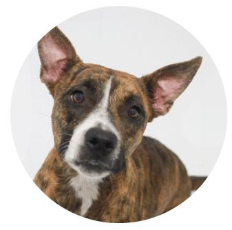 Adoptable Pets at El Paso Animal Services