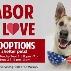 El Paso Animal Services – Adopt, Foster and Donate